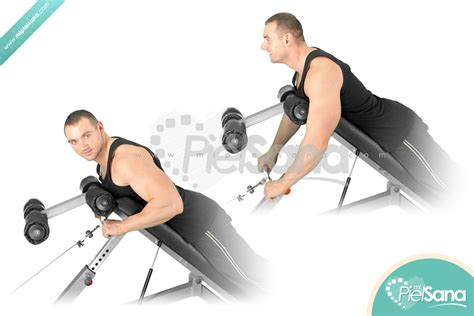 incline bench row incline bench row 28 images dumbbell incline bench two