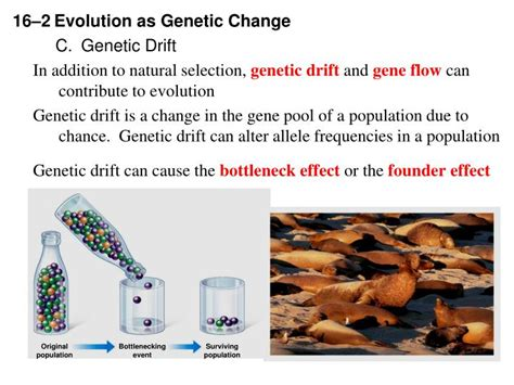 section 16 2 evolution as genetic change ppt chapter 16 evolution of populations powerpoint