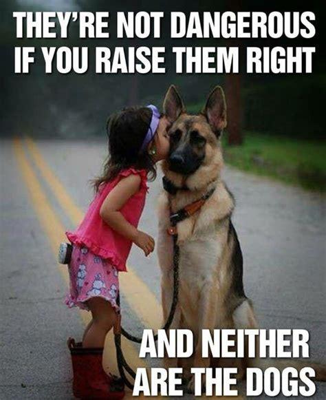 Serious Dog Meme - 25 best ideas about dangerous dogs on pinterest