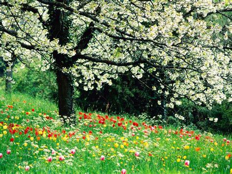 beautiful spring widescreen desktop wallpepers beautiful birds and spring