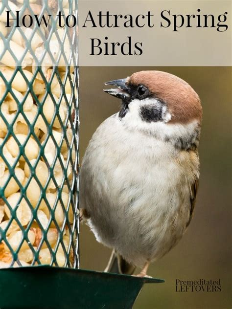 how to attract wildlife to your backyard how to attract birds to your backyard how to attract