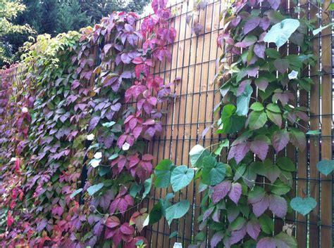 Délicieux Bassin Pour Petit Jardin #9: 1000_______cloture-bois-vegetale_74.jpg