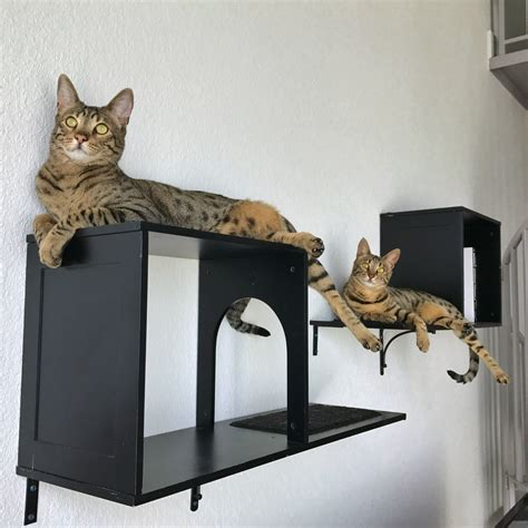 sophia wall mounted cat tree review kitty loaf