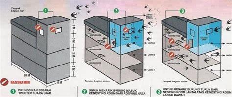 Timbangan Untuk Sarang Walet cara cepat sukses budidaya burung walet rumahan