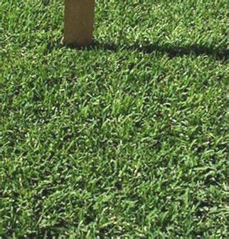 which types of grass should i plant in austin