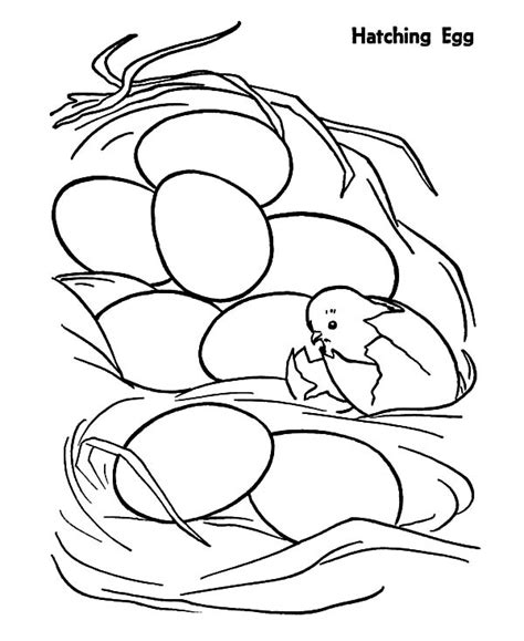 hatching egg coloring page chicken egg netart