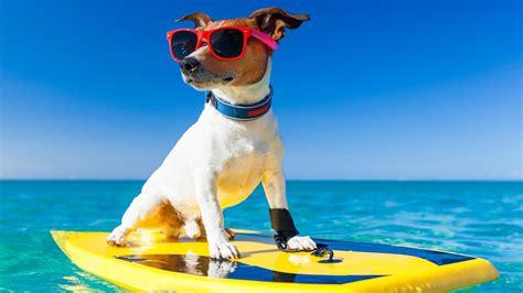 imagenes despues de unas vacaciones tips para tener unas buenas vacaciones el blog de yes