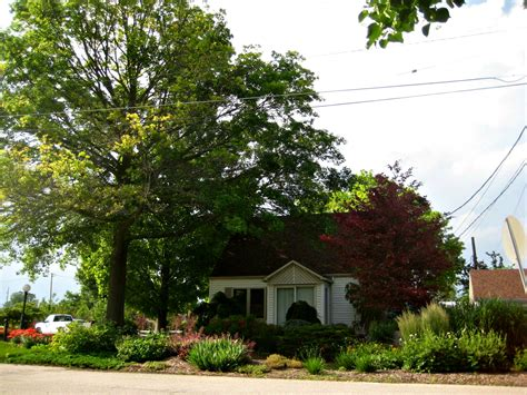 king house maple shade plants shade trees shrubs perennials edibles and annuals