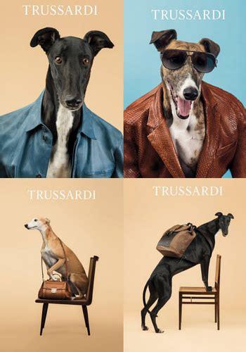 kerennya anjing ini jadi model fashion terkenal kabar
