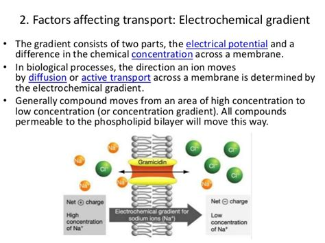 cell membrane transportfactorstransport  substances