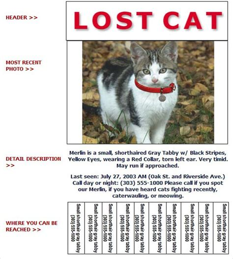 lost cat flyer template word stackerx info