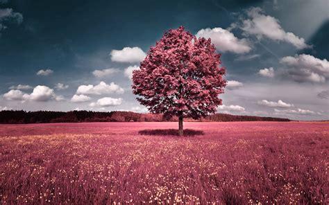 Wallpaper Pink Nature | pink nature wallpapers wallpaper cave