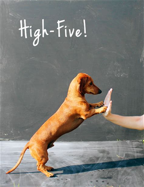 puppy high five let s get tricky teach your to high five ammo the dachshund