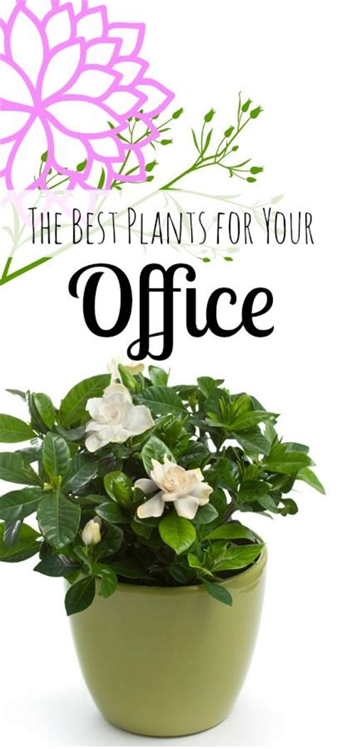 best plants for the office 1000 ideas about best office plants on pinterest office