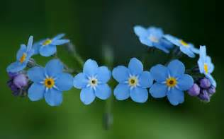 forget me not sheryleigh