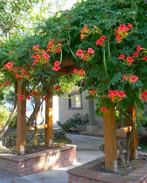 Plante Grimpante Orange by Plantes Grimpantes Pour Pergola 20 Id 233 Es Romantiques