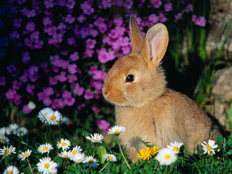 Baby Bunnies images bunny HD wallpaper and background