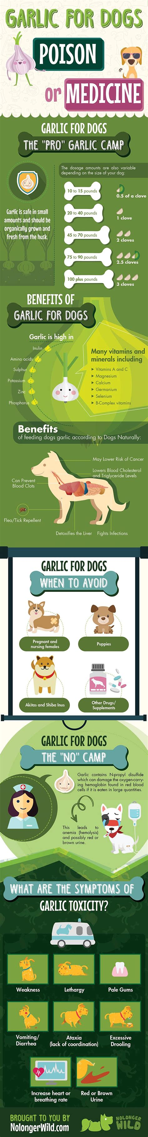 is garlic poisonous to dogs garlic for dogs poison or medicine infographic