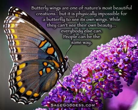 can a their butterfly wings are one of nature s most beautiful creations but it is physically
