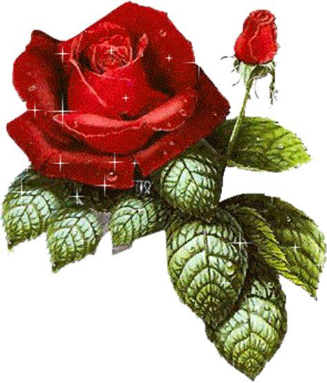 imagenes de rosas sobre agua gifs animados de rosas gifs animados