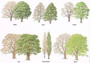 Types of tree silhouette stock photography image home decor gallery