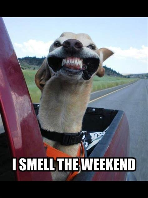 Happy Friday Haute Gossip by I Smell The Weekend Hysterical Summer