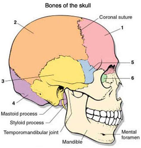 formicolio alla testa e al viso nevralgia trigemino cefalea emicrania malocclusione