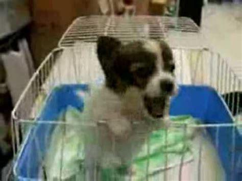 puppy screaming puppy screams elmo n3os3r