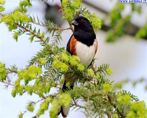arte fiori fiori e uccelli arte e natura un legame indissolubile