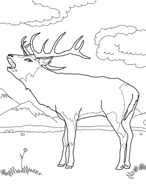 deer family coloring page red deer coloring page super coloring