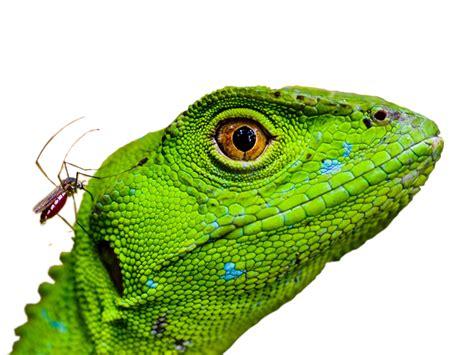 imagenes sin fondo gimp montaje y recorte camilocolombia