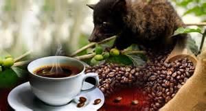 Bali Coffee Plantations   Luwak Coffee   Places to Visit