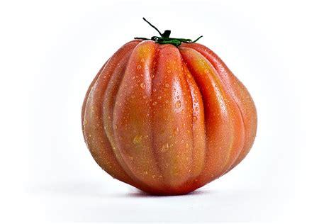 pomodori cuore di bue in vaso pomodoro cuor di bue indeterminato l ortofruttifero