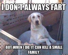funny animal pictures   day  pics funny animals