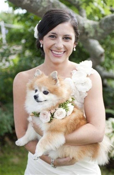 precious puppies pets precious puppies 2024818 weddbook