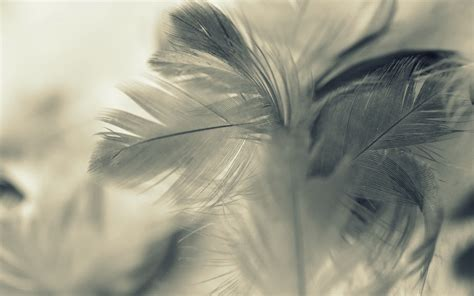 feather background feather background 183 free amazing hd