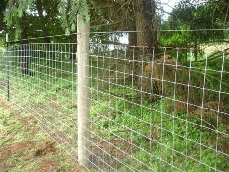 Best Fencing For Goats   Fence Ideas