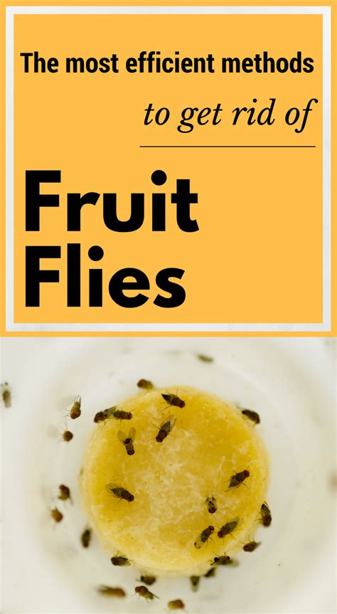Cleaning Greasy Kitchen Cabinets by The Most Efficient Methods To Get Rid Of Fruit Flies