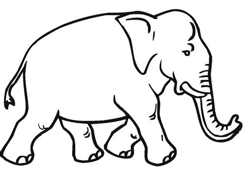 template of elephant animal template animal templates free premium templates