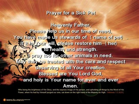 prayer  sick pet prayer pinterest