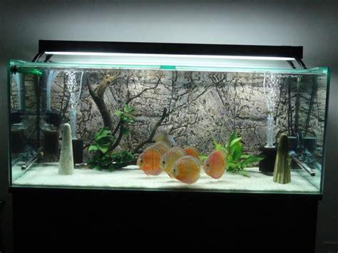 aquarium return design pretty fishtank white sand discus aquarium