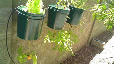 vegetable gardening in arizona growing a backyard vegetable garden in arizona