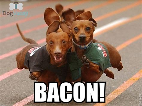 Bacon Memes - best bacon memes bacon today