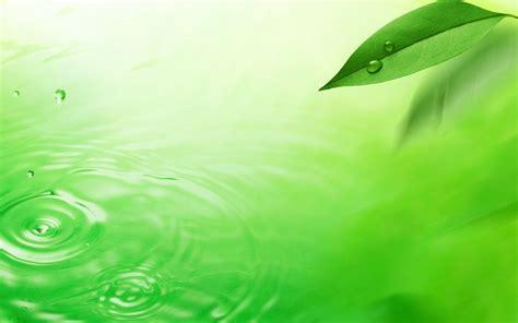 wallpaper green fresh watermark fresh green leaf wallpaper 4 1440x900