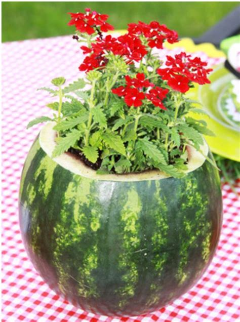 Watermelon Decorations by 1000 Ideas About Watermelon Centerpiece On