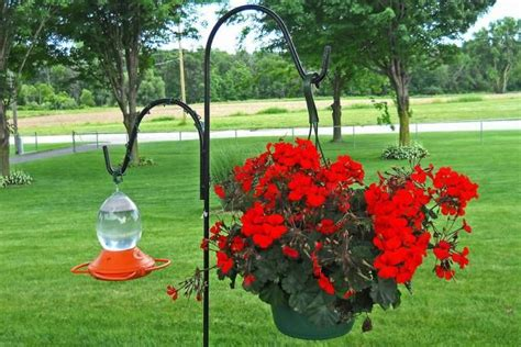 25 best ideas about humming bird feeders on pinterest