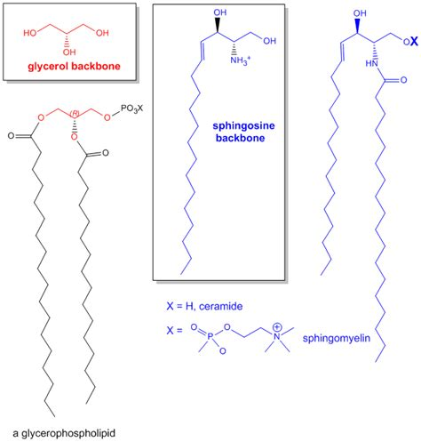 lipids diagram structural picture of lipids images