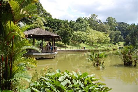 The Botanic Gardens Singapore File Symphony Lake Singapore Botanic Gardens 20081227 04 Jpg Wikimedia Commons