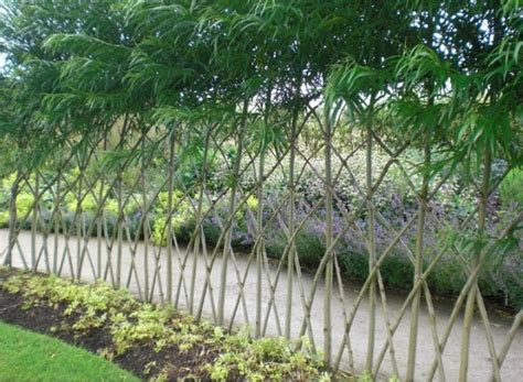 20 living privacy fence ideas