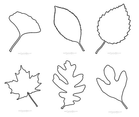 printable traceable leaves fall leaf preschool printables
